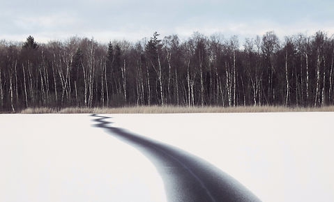 Divided- Winter Lake and Birch Forest, T
