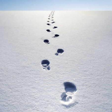 Alien Footprints: Lessons from Antarctica