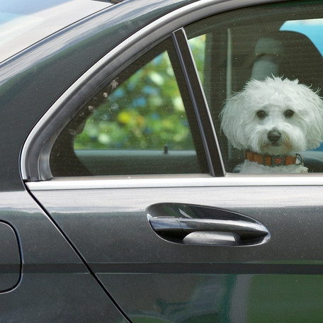 8 Ways to Remove Pet Hair From Your Car