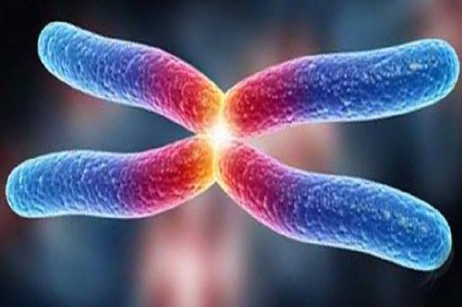Entrevista con un biólogo del fitness acerca de los telómeros.