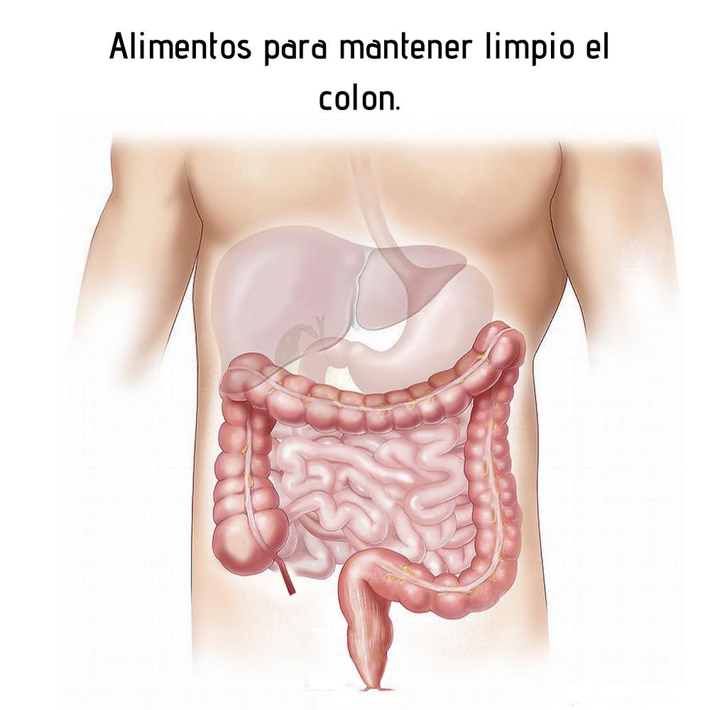 """Si nos acostumbramos a mantener limpio el colon, eso nos asegura una salud intestinal, nos mantiene libres de diverticulitis y cáncer de colon y facilitamos el tránsito de los alimentos.  Además:   Se evitan el estreñimiento  y la diarrea crónicos.  Adiós a las hemorroides y a los gases. Combatimos el síndrome de intestino irritable y otras patologías intestinales. Se absorben mejor los nutrientes y el agua, ya que fluye todo más fácilmente por nuestro sistema. Se minimiza el riesgo de cáncer colorrectal.   Pongamos un caso ejemplo, cuando el estreñimiento se hace severo, es cuando corremos mayor riesgo de cáncer colorrectal, porque las paredes del intestino hacen un esfuerzo excesivo. Ese esfuerzo puede ocasionar pequeños abultamientos que son llamados divertículos, que también alojan restos de alimentos allí, imaginen que es una pequeña podredumbre interna.  Es muy importante consumir todos los días alimentos ricos en fibra, como la lechosa o papaya, ricos en vitamina A, como la zanahoria., así como vitamina D -que evita el cáncer- y ácidos grasos saludables.  Aquí y en todas nuestras redes, hemos hablado muchísimo del aguacate, de los frutos secos como las almendras y las nueces del Brasil, las semillas de ahuyama, el aceite de oliva. Esos son solo algunos de los ejemplos de los alimentos ricos en grasas saludables y que siempre les mencionamos. Por otra parte, beber mucha agua es indispensable para facilitar el tránsito de los alimentos. En ese consumo de agua,  preferiblemente incluir un vaso de agua tibia en ayunas todos los días.  El estrés surte un efecto inmediato sobre el sistema nervioso entérico, y esto hace que sea aún más difícil limpiar el colon.  Es importante recordar que el estrés surte un efecto inmediato sobre el sistema nervioso entérico, y esto hace que sea aún más difícil limpiar el colon.  Hay un dicho que reza: """"más que limpiar, no ensucies""""  y aplicado a este caso funciona perfectamente, en vez de tener que recurrir a métodos detox cuando e"""