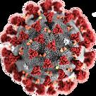 coronavirus_0.png