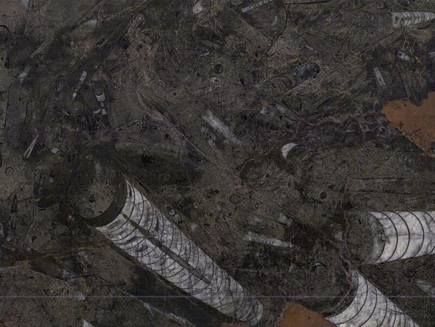 Pietra Fossol