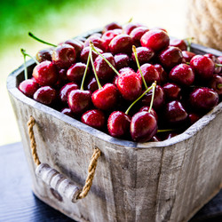 Pick your own cherries @ Roths