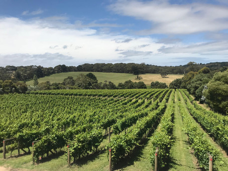Mornington Peninsula and Yarra Valley Day Trips