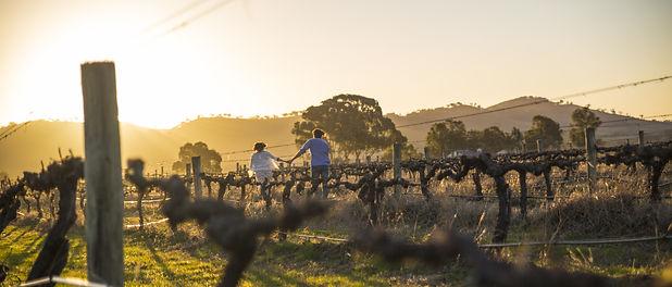 Couple running through Vineyard at Sunse