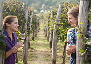 Lovely Young Couple Drinking Wine In Vin