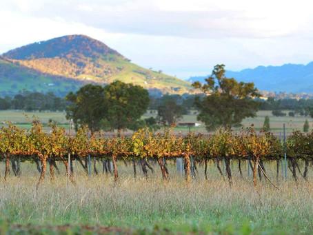 Meet the Winemakers   Part III
