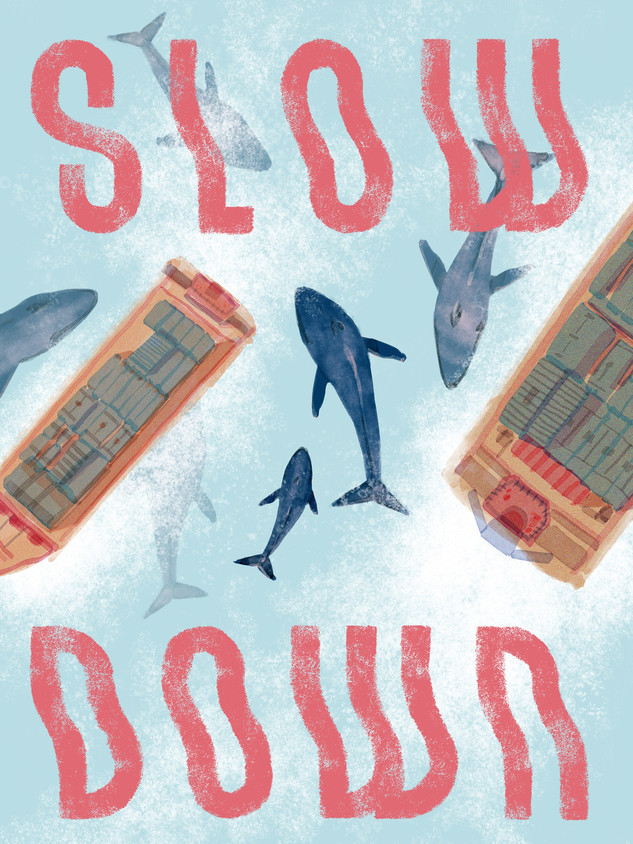 Whale Safe