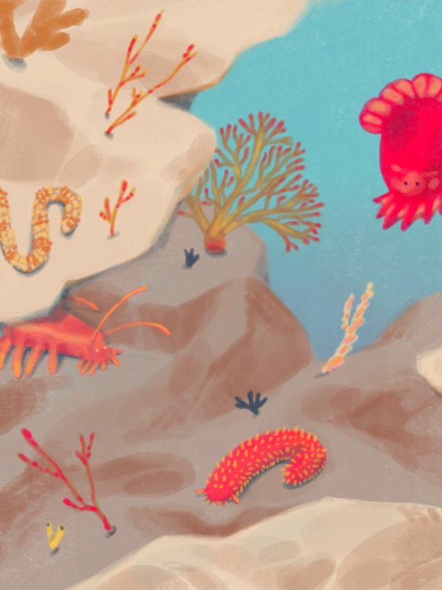 Searching the Deep Sea