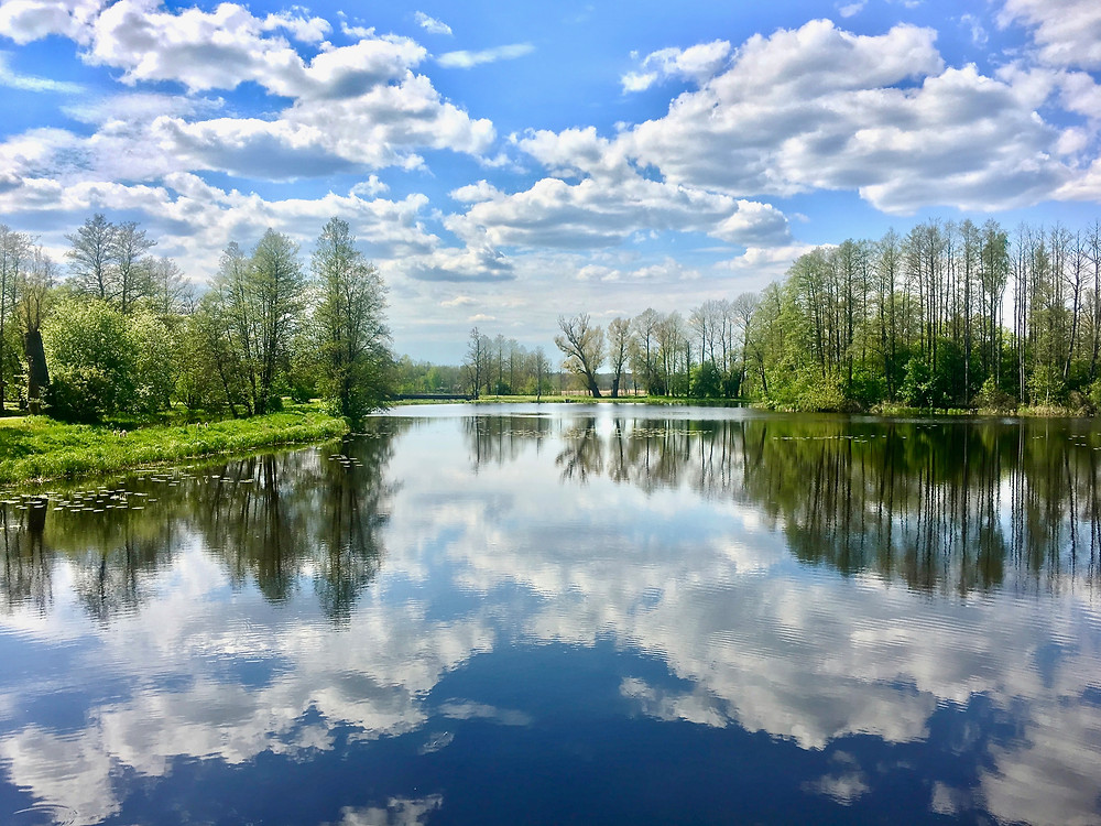 A cloudy blue sky and trees beside a lake perfectly reflected in the still water in the Bialowieza Forest, Poland