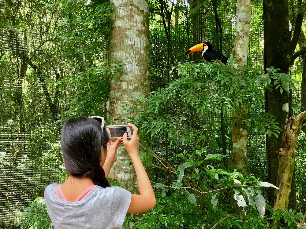 Eryn takes a photo of a toucan sitting in the trees above her at the bird sanctuary near Iguaçu Falls