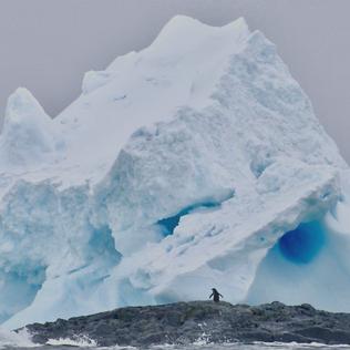 Arctic & Antarctica