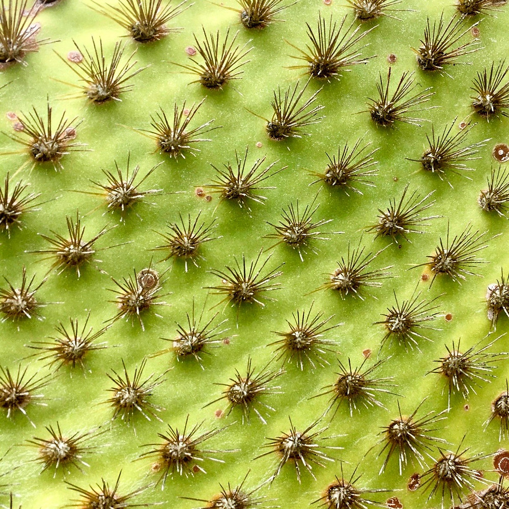 A closeup of the details of a cactus leaf
