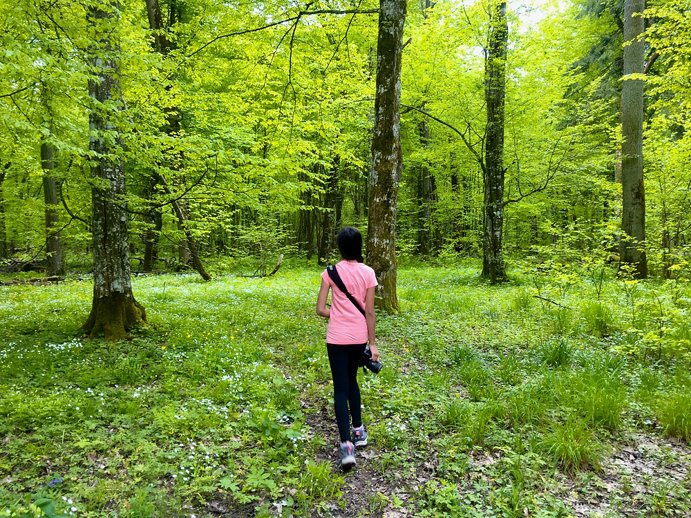 Eryn walks through lush green grass and trees in the Bialowieza Forest in Poland