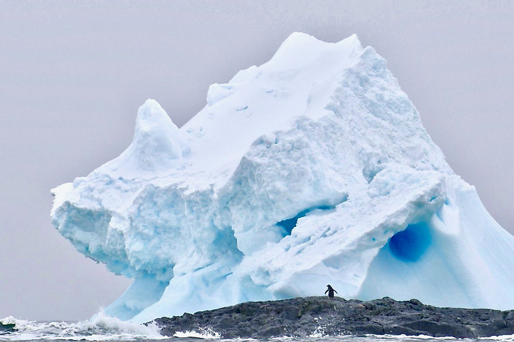 A small penguin dwarfed by a floating iceberg as it stands on a rock surrounded by the sea in the Antarctic