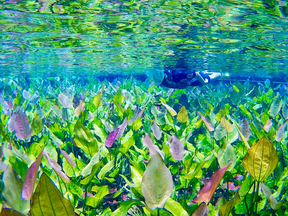 Snorkeling through an astonishing array of vibrant underwater plants of green and even purple