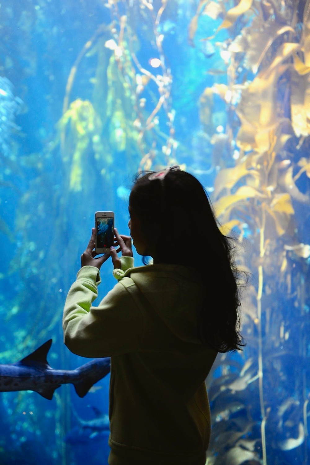 Eryn takes a photo in front of a Monterey Bay Aquarium tank