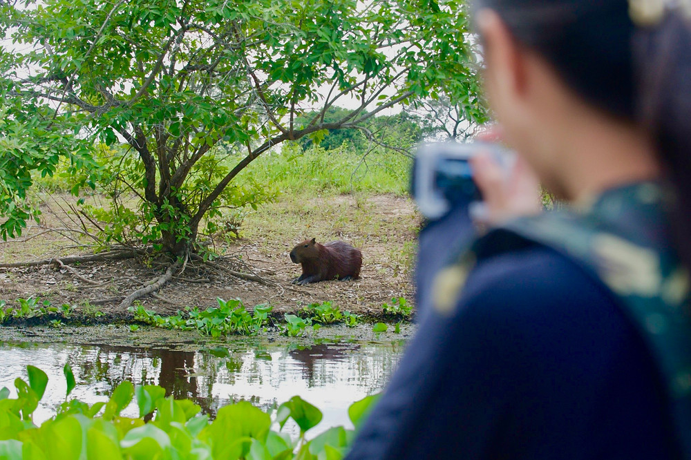 Viewing a capybara resting on the shores as we cruise down a river