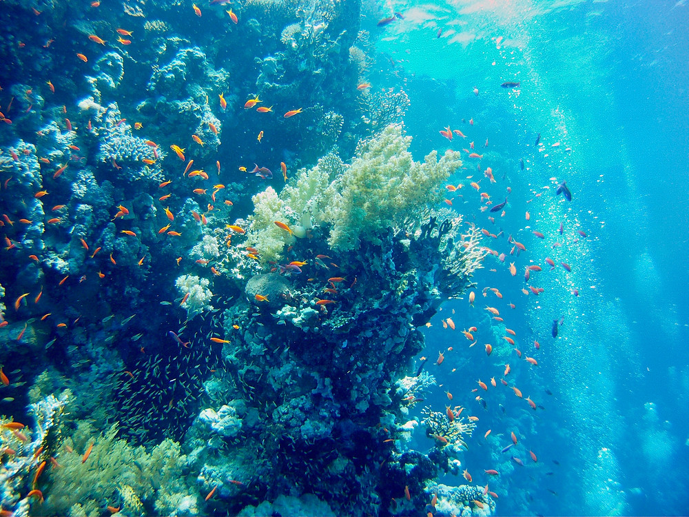 Light from above the surface illuminating a dense coral reef dotted with bright orange fish in the Red Sea