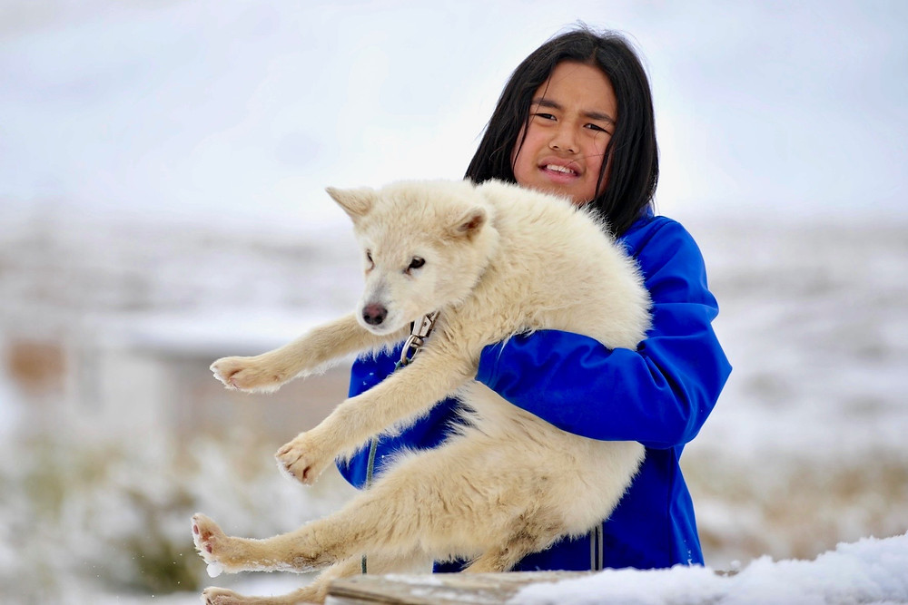 A girl in a purple jacket lifts her white wolfdog puppy in Sachs Harbor of the Canadian Arctic