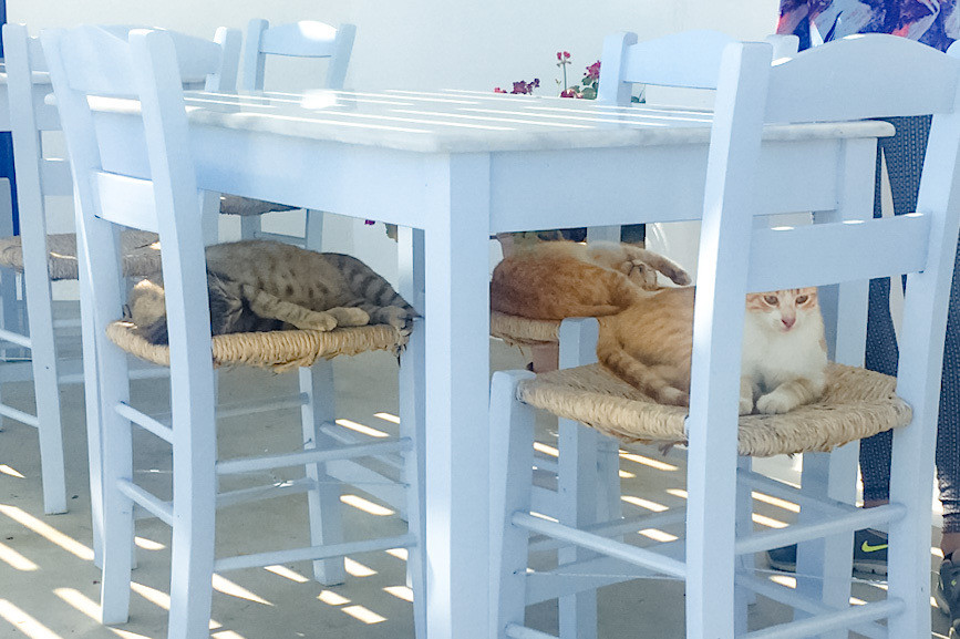 Three cats sleep on the three chairs to a table in Aghios Artemios, Santorini, Greece