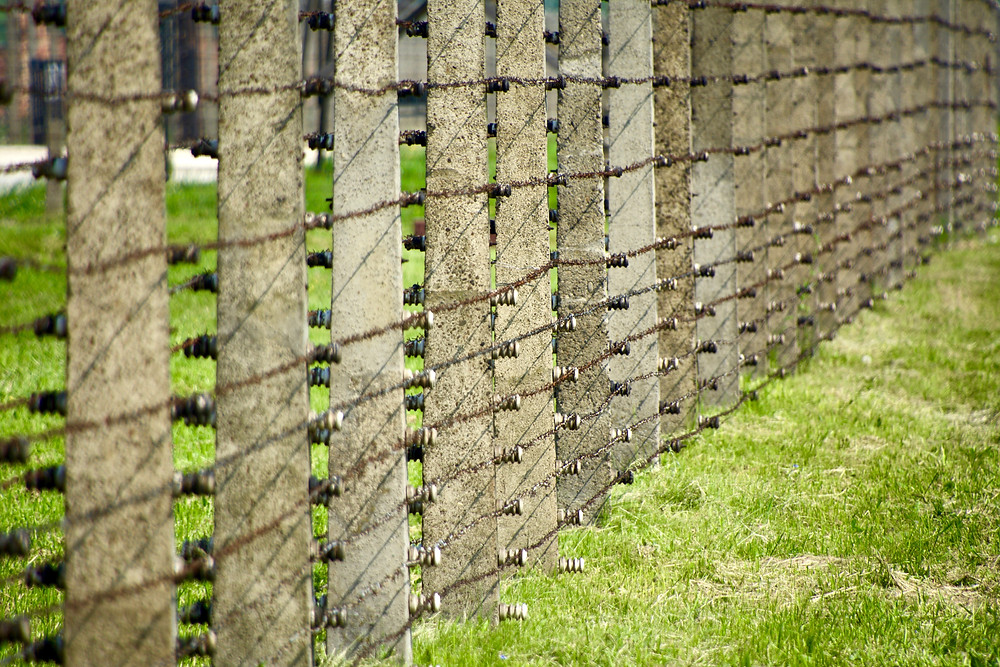 Layers of barbed wire fence posts stretching across green grass at Auschwitz II, Poland