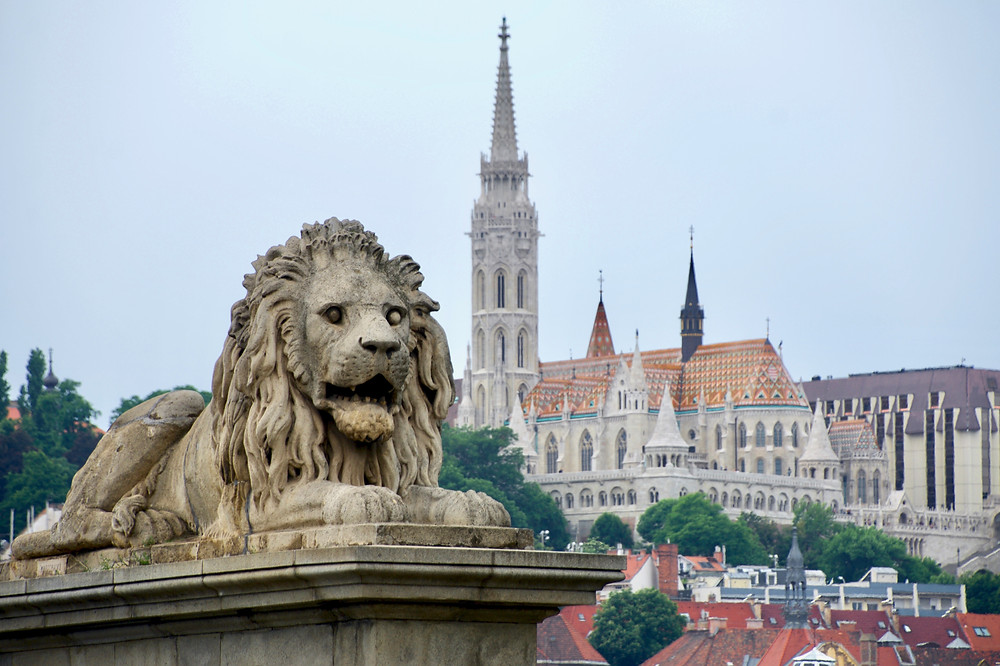 A famous stone lion of the Széchenyi Chain Bridge and the colorful Fisherman's Bastion of Buda in the distance in Budapest, Hungary