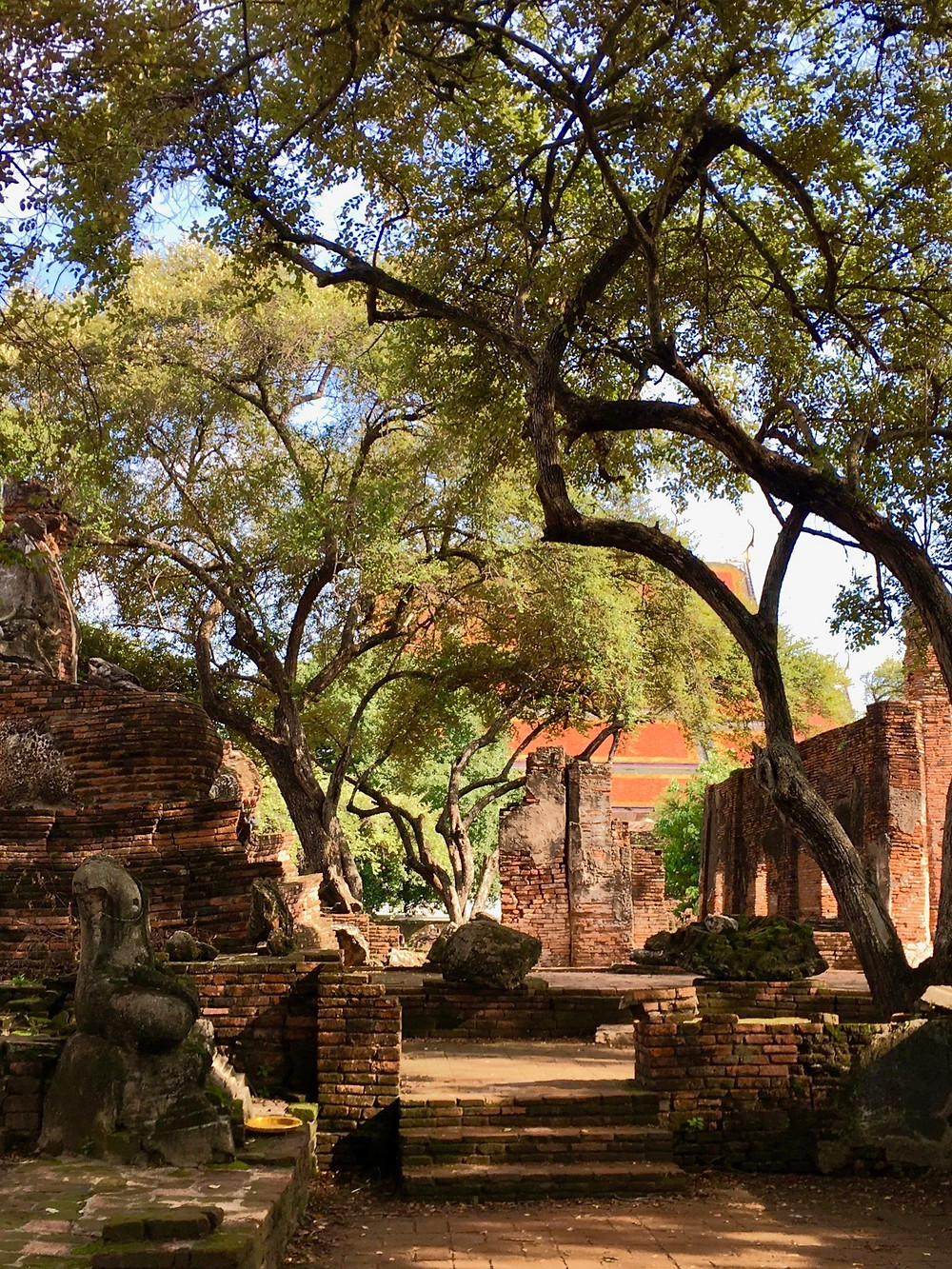 Trees provide shade over red-brick ruins and Buddha statues in Ayutthaya, Thailand