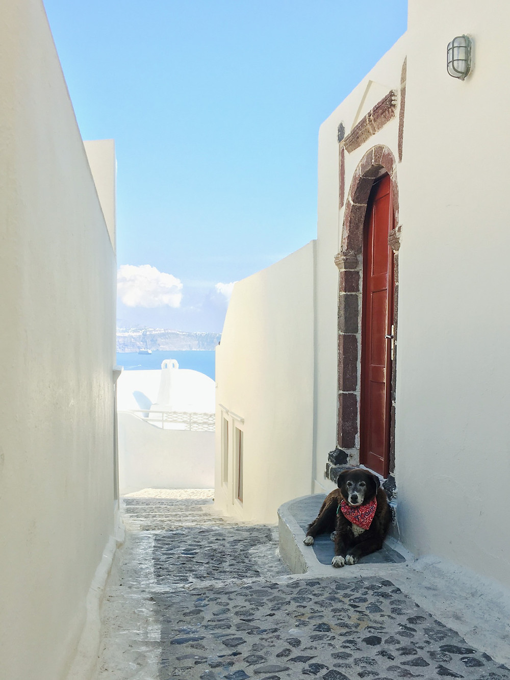 A dog with a red scarf sits on the doorstep of a red door surrounded by whitewashed walls in Oia, Santorini, Greece