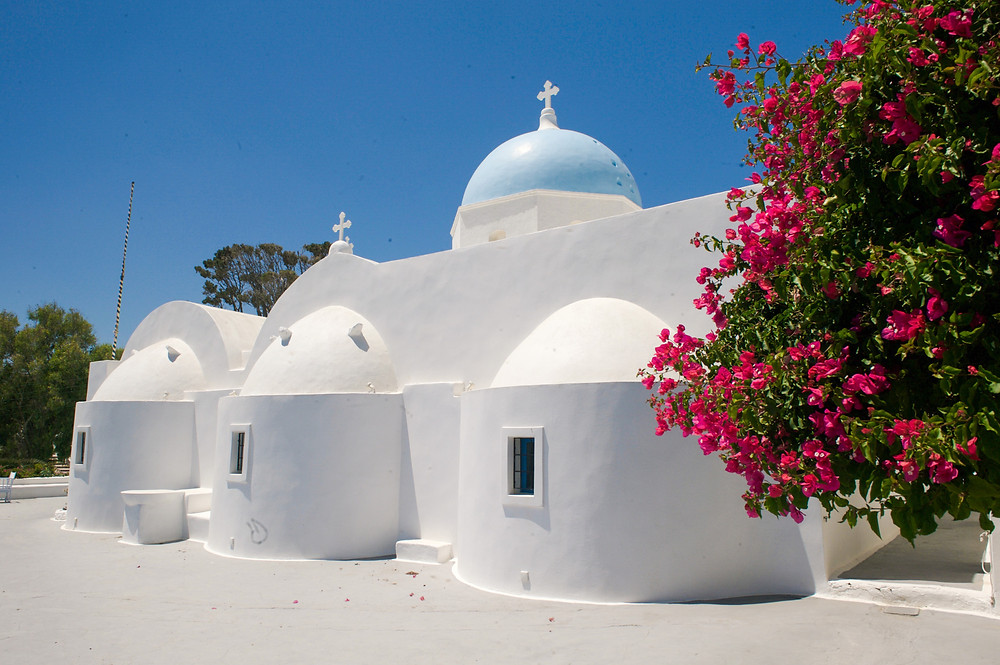 The curved, whitewashed architecture of a Santorinian church beside the pink flowers of a tree in Aghios Artemios