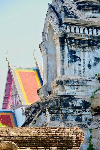 160725 Ayutthaya Stray Dog