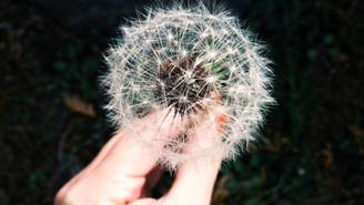 Mijn wens is...