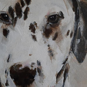 Dalmatian portrait commission.jpg
