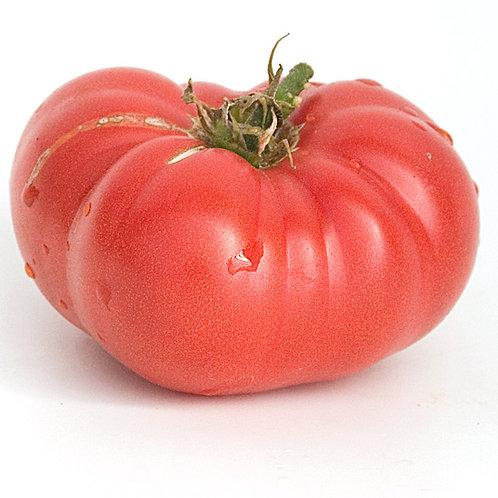 Waratah Tomato