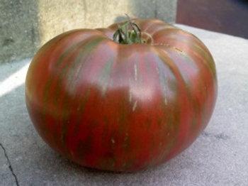 Fred's Tie Dye Tomato
