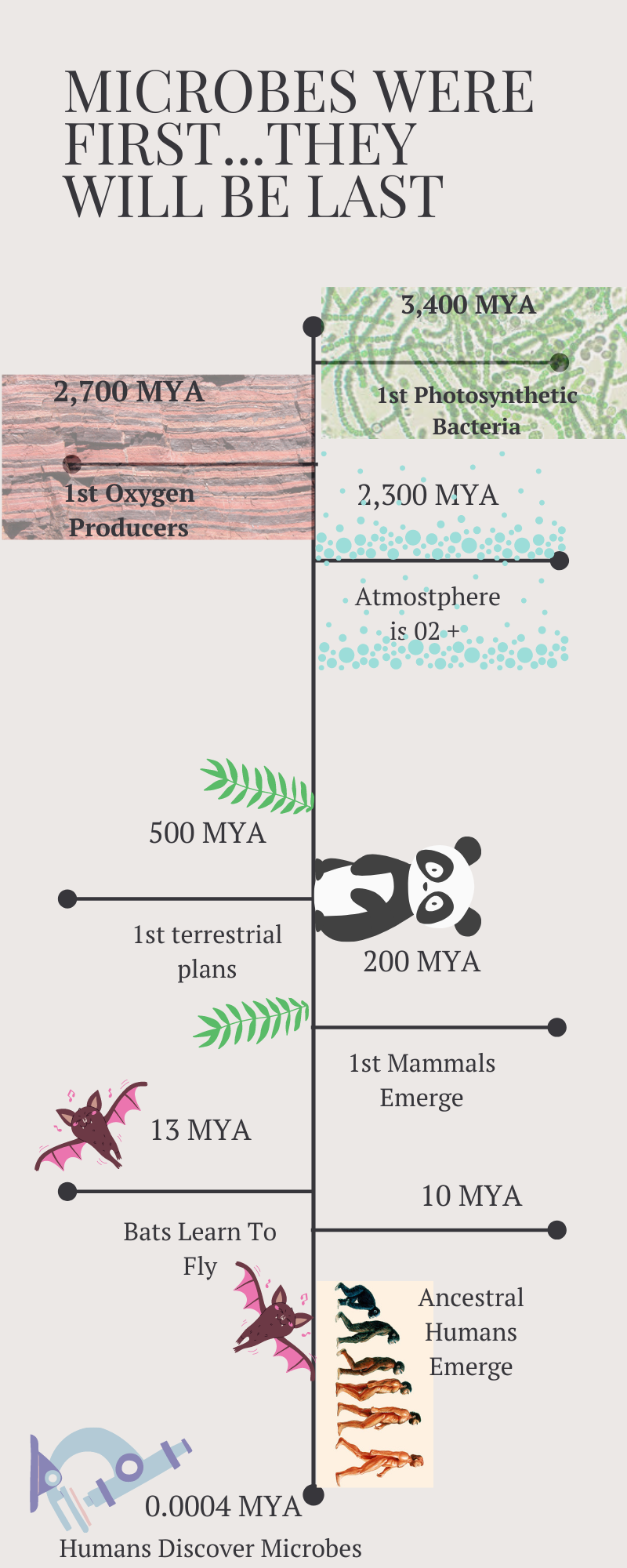 Origins of Life Timeline