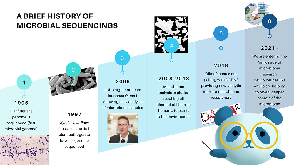 The history of microbiology from 1995 to present