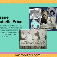Dr. Jessie Isabelle Price: A Research Most Fowl
