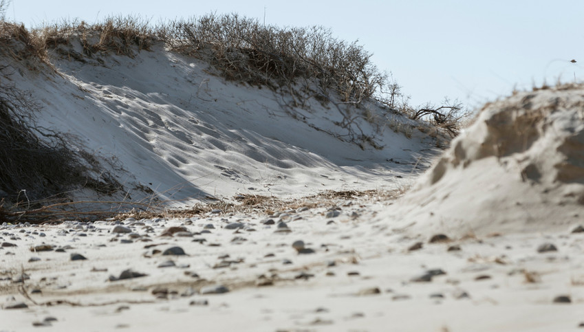 CapeCod Dunes.jpg