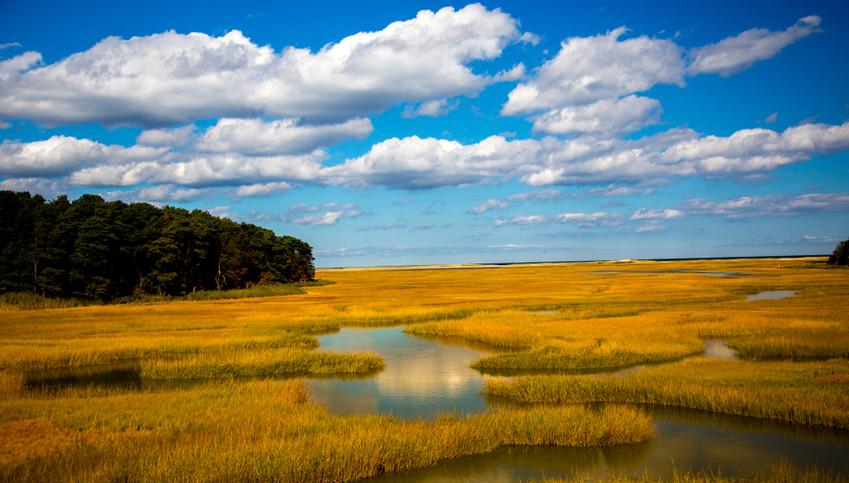 Wetlands in Sandwich.jpg