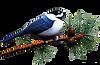 A Bird Logo.png