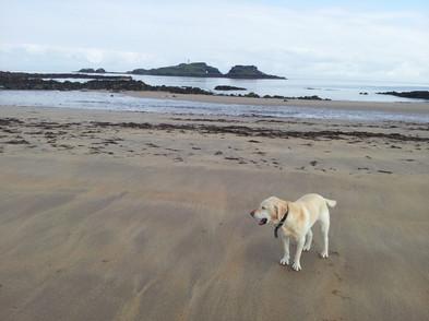 Tess yawing on beach.jpg
