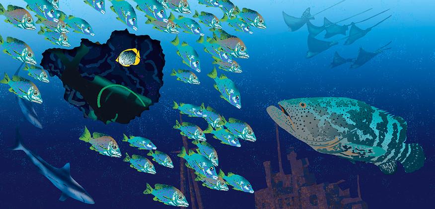grouper spread72.jpg