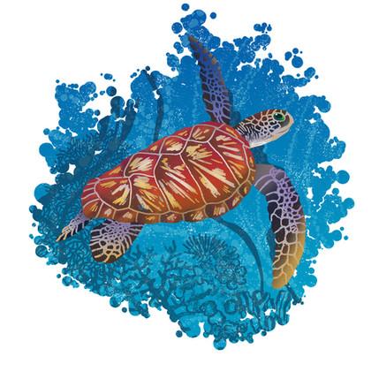 turtle vignette.jpg