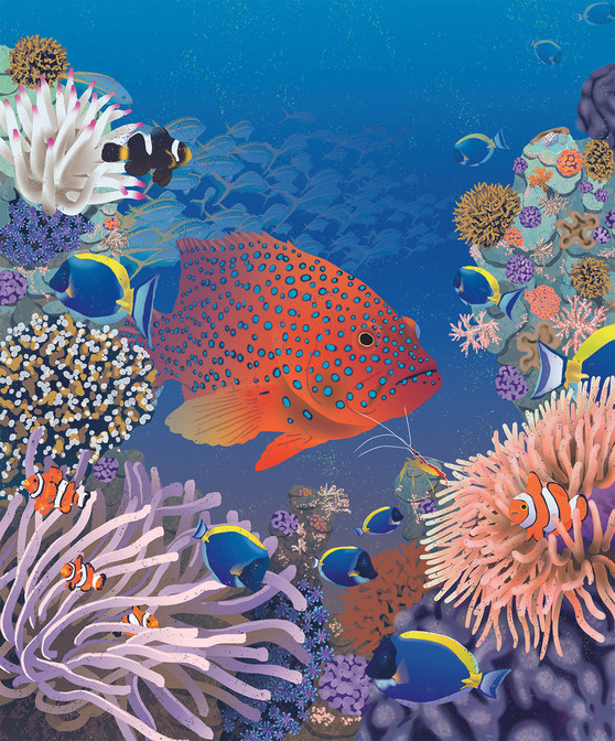 coral trout.jpg