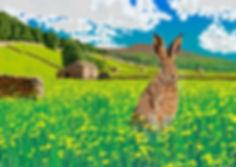 hare72.jpg