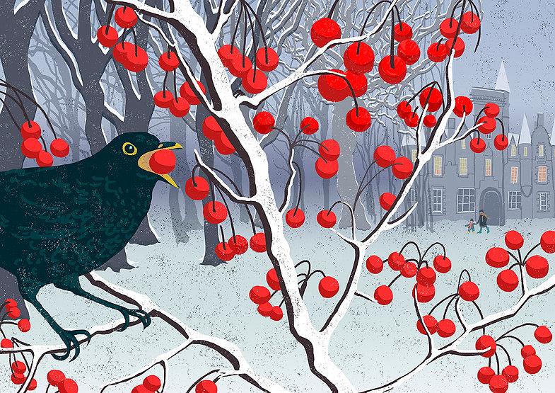 blackbird winter72.jpg