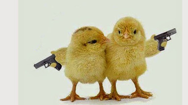 Chick, Chick, Boom!