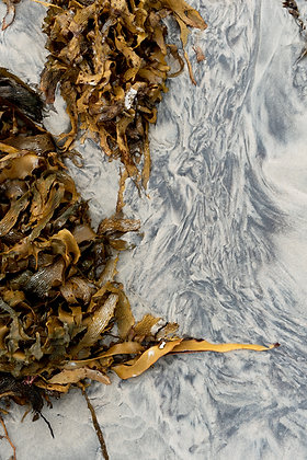 Art print Mineral, close up image of mustard coloured seaweed on a black and white washed beach. Celebrating summer memories.
